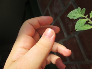 A hand and two small leaves